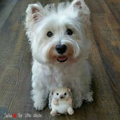 In Loving Memory, Westies, Puppies, Heart, Dogs, Animaux, Cubs, In Remembrance, Pet Dogs