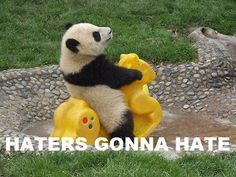hehe... oooh pandas.. so silly