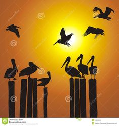 Feather, Old Things, Africa, Silhouette, Stock Photos, Sunset, Illustration, Nature, Animals