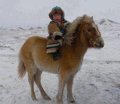 both in warm coats. Yakut horse, Siberia