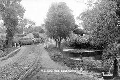 https://www.ebay.co.uk/itm/tgf-93-The-Duck-Pond-Shellingford-nr-Faringdon-Oxfordshire-Photo/232731886218?hash=item362fe6c28a:g:TTsAAOSwj2Zaz8RQ