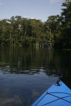 The Silver River, viewed from my kayak, was on this river as a child in the glass bottom boats at Silver Springs FLA. Aug. 2013
