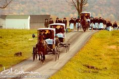 an amish wedding procession
