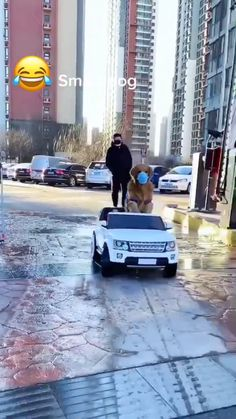 It's too bad the people aren't as smart as the dog. How hard would it be to have the bag boy deliver to the dog car? Do you need me to get you some groceries? Funny Dog Videos, Funny Animal Memes, Dog Memes, Funny Animal Pictures, Cute Funny Dogs, Cute Funny Animals, Cute Dogs And Puppies, Funny Puppies, Puppies Puppies