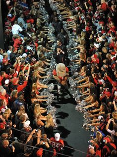 "Regret to say we always miss this part as we are at our tailgate (toasting with ""one more!"") right up to kickoff. dawg walk #Georgia #Bulldogs #UGA"