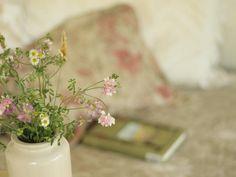 comfort - wisteria and sunshine