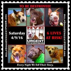 6 DOGS ON DEATH ROW @ NYC ACC DUE 2B DESTROYED B4 NOON ON SA... - Care2 News Network