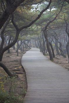 Wood path to Sangseonam hermitage, Namsan peak, Seoul, South Korea ✯ ωнιмѕу ѕαη∂у