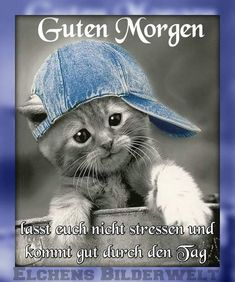 Good Morning Funny Sayings # GutenMorgenWitzigeSprüche … Good Morning Funny, Good Morning Good Night, Morning Humor, Morning Quotes, Animals And Pets, Cute Animals, Good Vibe, Montage Photo, My Prayer