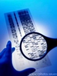 » High-Risk Genes for Schizophrenia, Autism Linked to Cognitive Dysfunction - Psych Central News