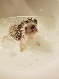 Ideas baby animals drawings sweets for 2019 Baby Animals Pictures, Cute Animal Pictures, Animals And Pets, Cute Little Animals, Cute Funny Animals, Baby Hedgehog, Tier Fotos, Cute Creatures, Animals Beautiful