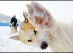 Photobombs best animal