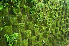 Retaining wall covered in moss