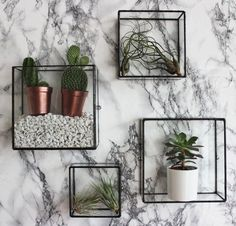 The Pappus Square Box Wall Mount can be filled with air plants, used as a simple water and flower feature or you can create your own indoor square
