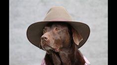 Ida best dog model