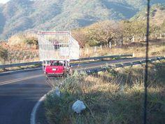 Shopping Cart Truck