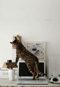 Cats can make good study buddies.