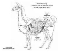 Image result for llama graphics