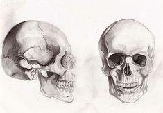 skull anatomy by Gilstrap