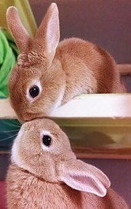 AWW THE BUNNIES ARE KISSING!!!