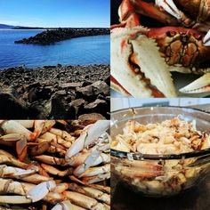 SUP crabbing. Working for it. . . . . #dungenesscrab #dungeness #crabbing #crab #pnw #pnwonderland #oregon #oregoncoast #ocean #saltysea #salty #oceanlove #sea #sealife #pacificocean #pacific #travel #SUP #adventure #fall #autumn #wanderlust #paddleboarding #paddlesports