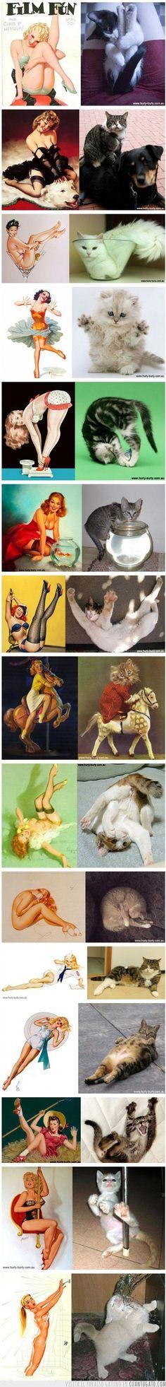 18153 - Lo que las chicas hacen, los gatos lo pueden hacer mejor