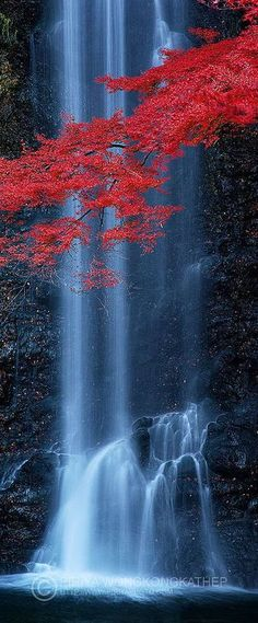 Minoh Waterfall near Osaka http://emmabeatrice22.tumblr.com/