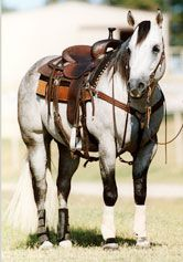 Playgun - Lifetime Earnings $185,733, #3 All time leading maternal sire of cutting horses