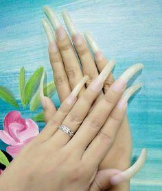Nails Only, Love Nails, Pretty Nails, Long Natural Nails, Curved Nails, Long Fingernails, Dark Red Lips, Exotic Nails, Cat Nails