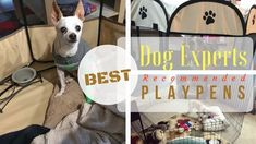 Dog playpens can be used for a variety of purposes...check out dog expertly chosen and approved exercise pens for your hound.