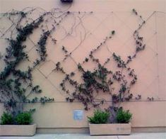 Diagonal cables for creeping vines. Would love this around the carport to hide the cars, yet still transparent!