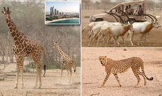 A wildlife park in the middle of the Arabian desert #DailyMail