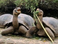 Google Image Result for http://www.travel-images.com/pht/galapagos7.jpg