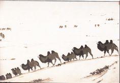 吴作人  大漠牧归   1982年