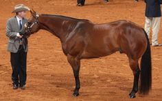 How to show like a pro, with tips from AQHA Professional Horseman Mark DeFreece.