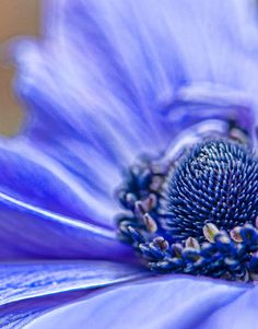 Macro Flower Photography by Tom Dorsch | Inspiration Grid | Design Inspiration