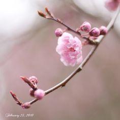 Wonder of the Spring