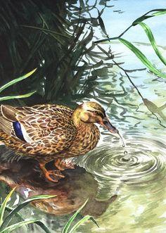 Freshening Up original realistic watercolor by StudioSterna