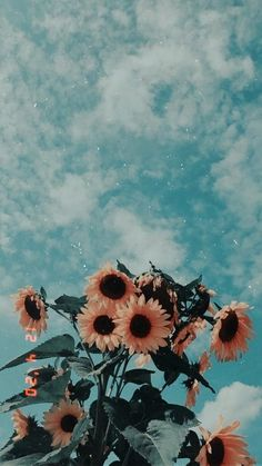 35 Most Popular Flower Wallpapers For Your Iphone Colorful Wallpaper,Flower Wallpaper,Landscape Wallpaper. Aesthetic Pastel Wallpaper, Aesthetic Backgrounds, Colorful Wallpaper, Aesthetic Wallpapers, Trendy Wallpaper, Aesthetic Stickers, Iphone Wallpaper Tumblr Aesthetic, Perfect Wallpaper, Pastel Color Wallpaper