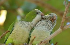 A new study explores the complex social structure of quaker parrots, revealing a few surprises along the way.