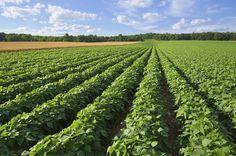 cool Бизнес-идеи для начинающих: планирование фермерского хозяйства