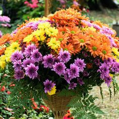 Refresh Containers with Cool Fall Flowers and Foliage | Garden Club