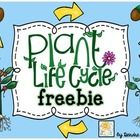 Teaching plants is so cool! I love teaching kids how we just can't live with out them. I created this little freebie to provide my students with ad...