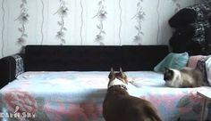 La dueña de este perro pone una cámara oculta. ¡ESTO es lo que hizo su perro!