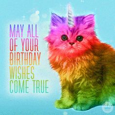 """101 Funny Cat Birthday Memes - """"May all of your birthday wishes come true. Happy Birthday Crazy Lady, Today Is Your Birthday, Happy Birthday Funny, Happy Birthday Wishes, Birthday Greetings, Cat Birthday Memes, Birthday Quotes, Birthday Gifs, Birthday Kitten"""