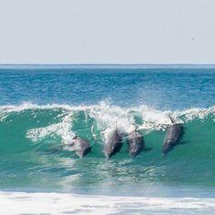 Praia do Mar Grosso - Laguna