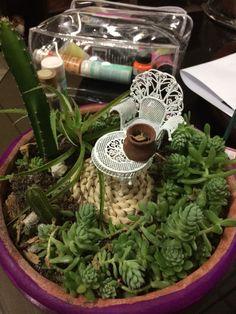 Mini jardín en Proceso