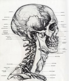 Znalezione obrazy dla zapytania The Complete Guide to Anatomy for Artists & Illustrators: Drawing the Human Form