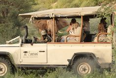 Guided by Samburu warriors, your guide and tracker will help you to read the book of nature. We don't rush while on safari and there will be time to observe the wild animals, to see how they interact and to study their behaviour and their habitats.