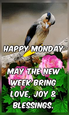 Good Morning Monday Gif, Morning Pics, Morning Pictures, Good Morning Images, Good Morning Quotes, Happy Monday Images, New Week Quotes, Monday Inspirational Quotes, Blessed Week
